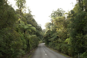 Strasse durch Waipoua forest